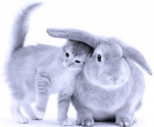 2011 год — год белого металлического Белого Кролика (Кота, Зайца)