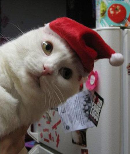 Кот считает себя хозяином