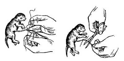 Беременность и роды у кошек