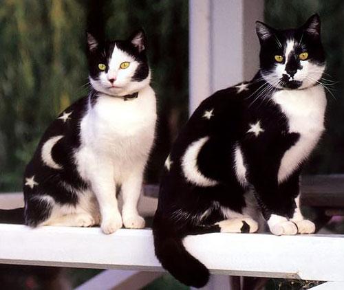 Кошачий бодиарт