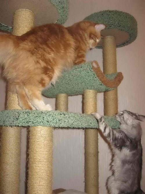 Когтеточки и когтедралки для кошек