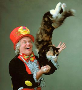 Цирковые кошки остались без жилья (видео)