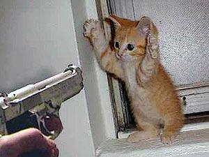 Заложник кота