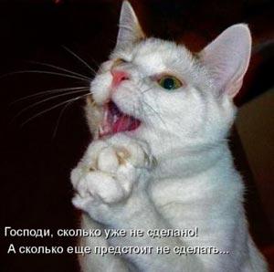 фото прикольные котов и кошек
