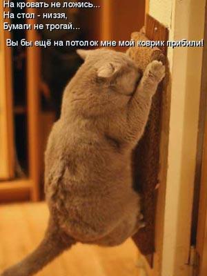 http://zoocats.ru/photo/121.jpg