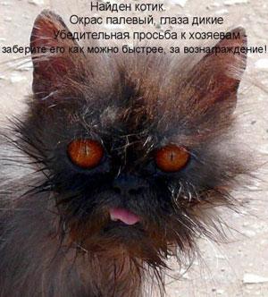 Найден котик окрас палевый глаза