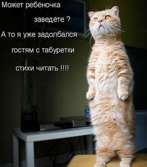 Читать приколы про котов