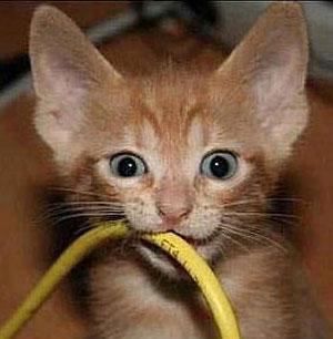 Какие опасности подстерегают кошку дома