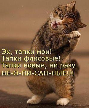 Картинки про котов смешные новые